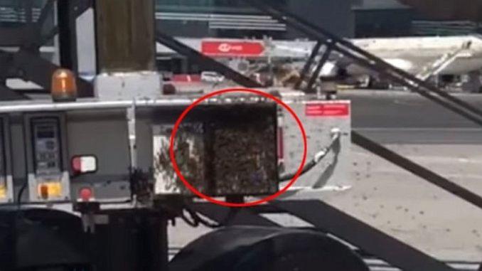 esta vez la abeja del aeropuerto de Estambul