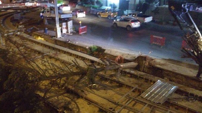 tramvay projesi icin kesilen izmitin agaclari ne oldu