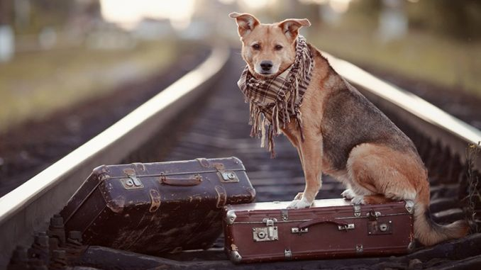 tcdd pet transport rules