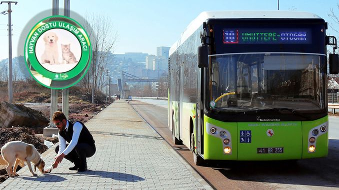 Animal-Friendly Buses on the Road in Kocaeli