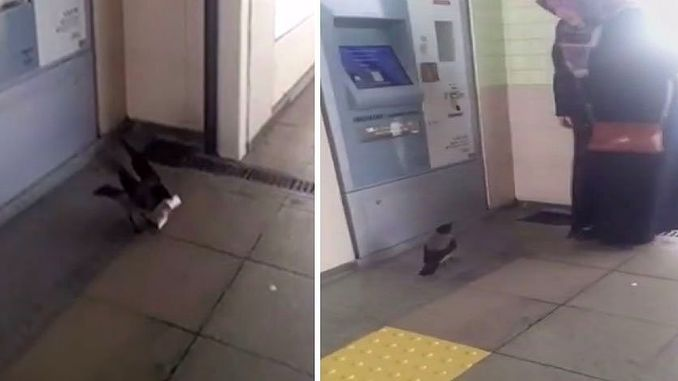 The crow who caught the money of the woman who loaded her card on marmaray