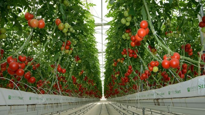vegetative production was estimated to increase over the previous year