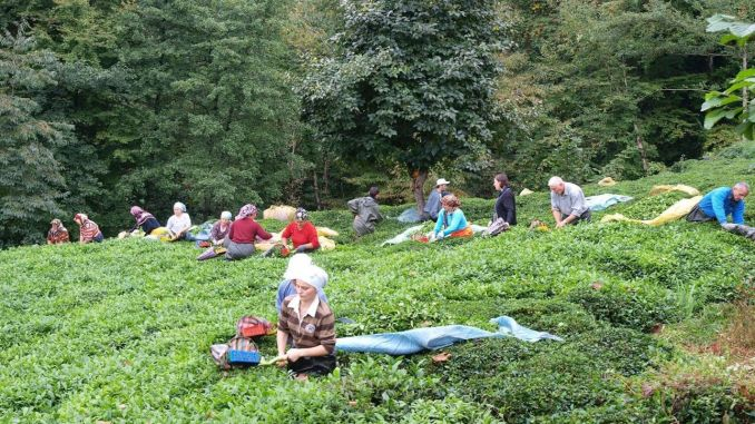 interior ministry published travel permit circular for tea harvest