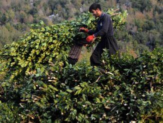 министарство пољопривреде и шумарства такође је извршило хиљаду тона залива