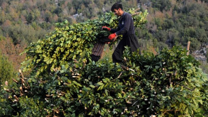 the agriculture and forestry ministry also carried out a thousand tons of bay production