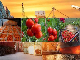 Xuất khẩu trong nông nghiệp đã tăng lên mặc dù Kovid