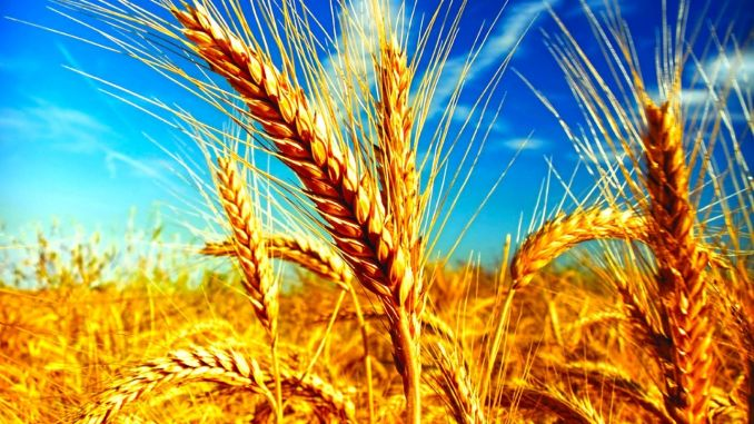 my wheat production is completely covered by domestic production
