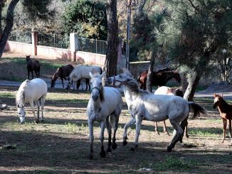 ibb embraces horses on the islands