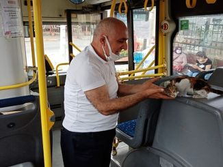 The pussy trapped in a private public bus was rescued after hours