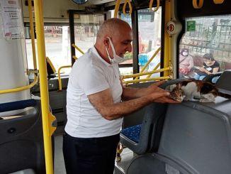 A privát nyilvános buszba csapdába ejtett punci órák után megmentették