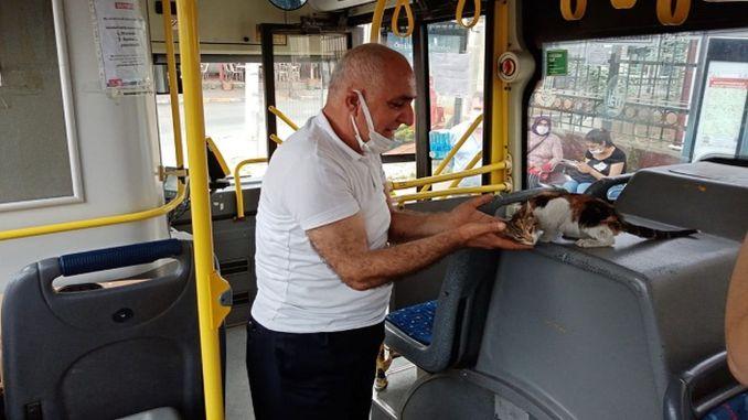 고양이는 공공 버스에서 갇혀 몇 시간 후에 구조되었다