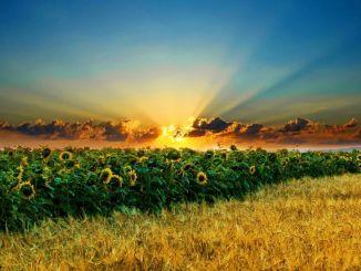 I pagamenti di sostegno agricolo ai produttori stanno iniziando oggi