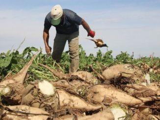 zálohové platby sa vyplácajú poľnohospodárom, ktorí dnes pestujú cukrovú repu v pokladnici