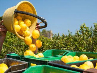 Tíz engedély a citrom kiviteléhez eltávolítva