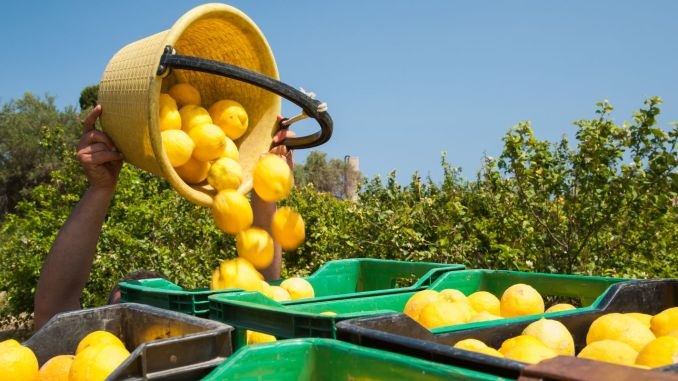 Ten permits for lemon exports Removed