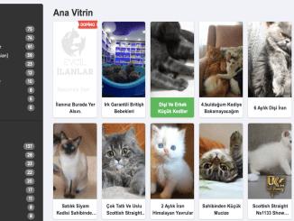 Gatos para la venta