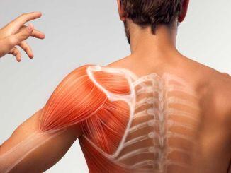 Apa pengobatan penyakit otot? Apa saja gejala penyakit otot?