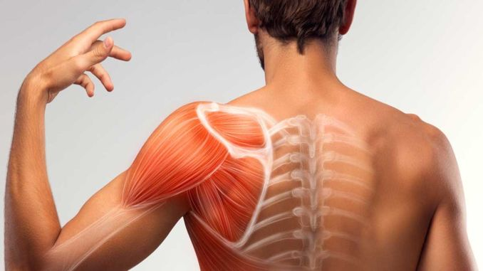 What is the treatment of muscle disease? What are the symptoms of muscle disease?