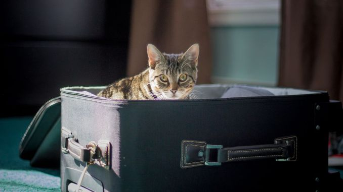 What you should do before taking your pet abroad
