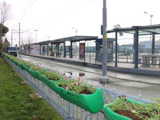 Pansies Bring Color to Akçaray Stations