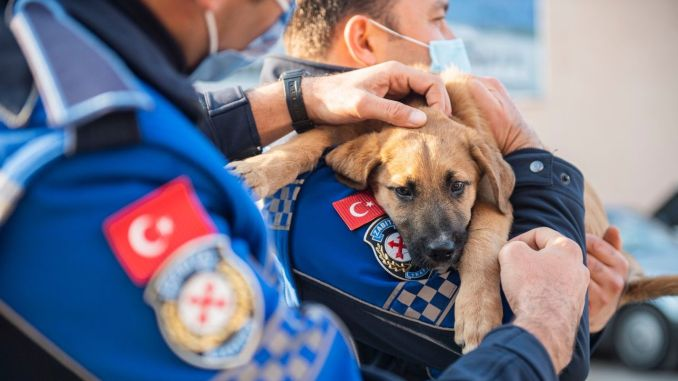The baby dog that the vehicle hit in Izmir took possession of the police