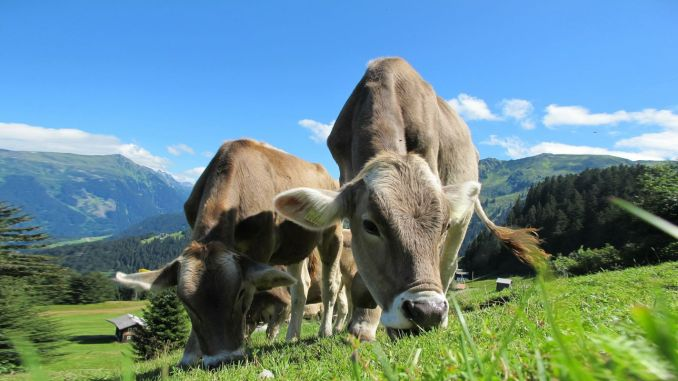 Good news for dairy producers and large animal producers