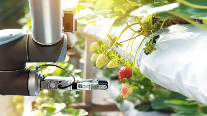 طريق الوجود في المستقبل الزراعة الذكية