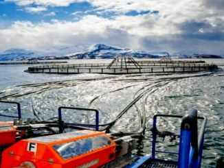 A brand new approach to global salmon farming