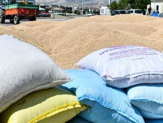 Support for chickpea seed per cent in Ankara