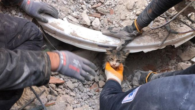 Izmir fire department saved a thousand animals