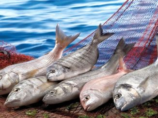 declared the year of the united nations the year of fishing and water products
