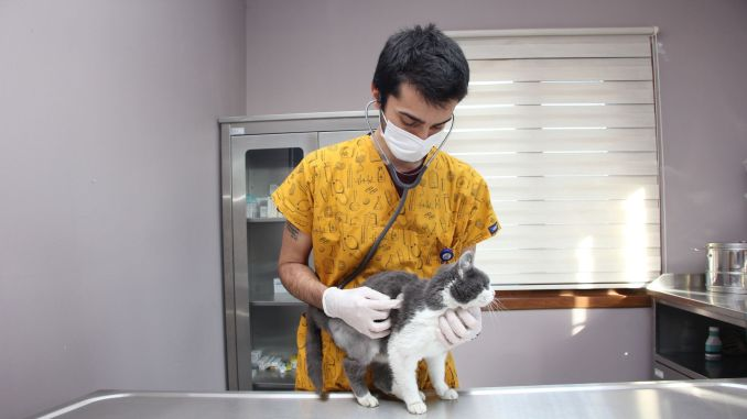 examined and treated a thousand street creatures in the year of ibb