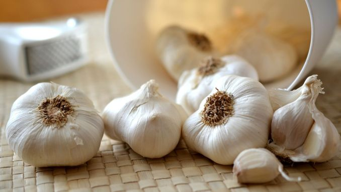 caution when consuming over-the-counter antibiotic garlic
