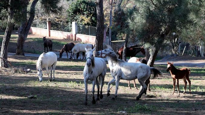 Answer the question of where those horses are from the imamoglu, minister of agriculture, please come out and explain
