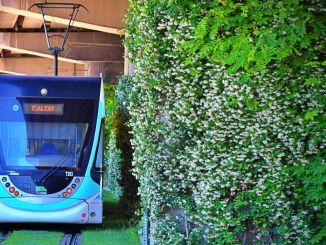 Transportation and pedestrian axes of Izmir smell of jasmine