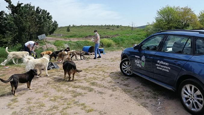 skoda goodness cars did not forget stray animals