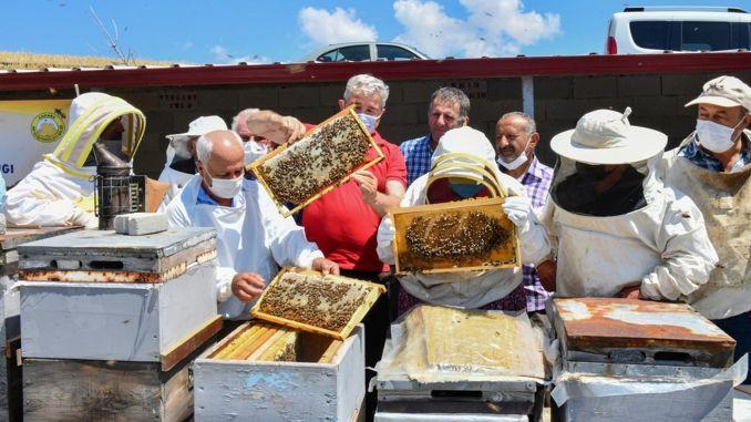 بدأ التدريب على تربية النحل في العاصمة