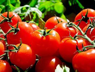 nepoznate blagodati rajčice