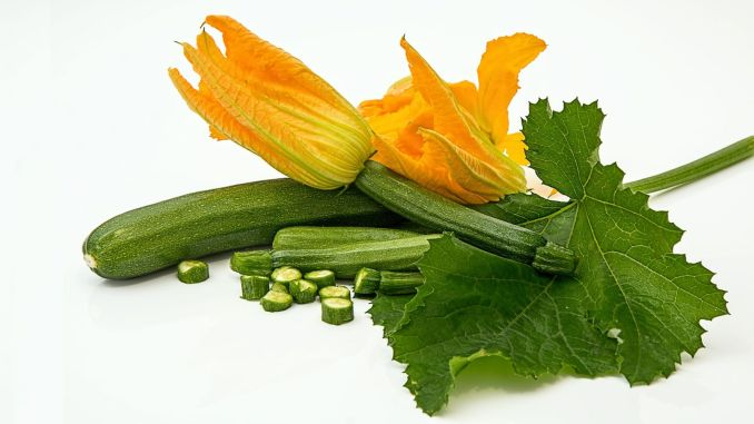 What are the benefits of zucchini, one of the favorite vegetables in summer?