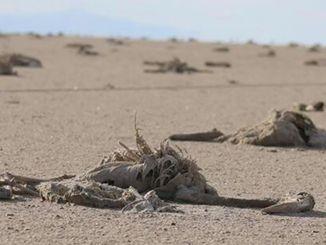 Objašnjenje ministra pakdemirlija o smrtnim slučajevima flaminga u slanom jezeru