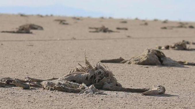Minister pakdemirli's explanation on flamingo deaths in the salt lake