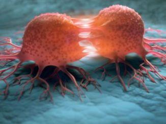 hibernating cancer cells