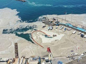 बीटीयू म्यूसिलेज फॉर्मेशन पर समुद्री परिवहन प्रदूषण के प्रभाव की जांच करेगा