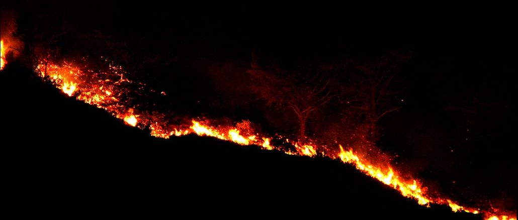 Latest Situation in Forest Fires in the Last Day
