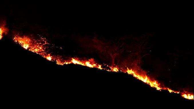 המצב האחרון בשריפות יער ביממה האחרונה