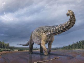 Скам'янілості титанозаврів Шовкового шляху, виявлені в Сіньцзяні