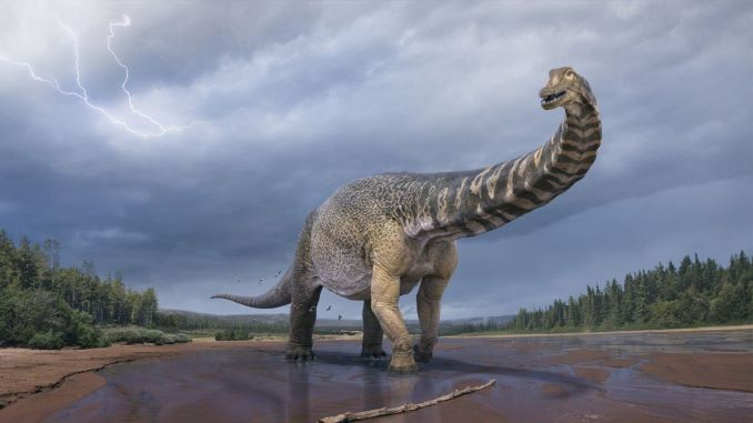 Silk Road titanosaur fossils discovered in Xinjiang