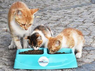 поддерживать бездомных животных в летнюю жару