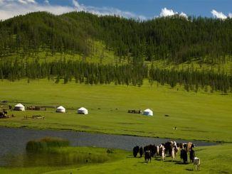 Kitajska ponuja več kot milijardo dolarjev za mongolske pašnike