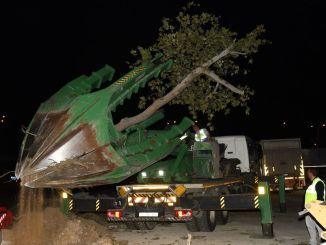 Træerne på metrolinjen på Labor City Hospital i Bursa blev flyttet